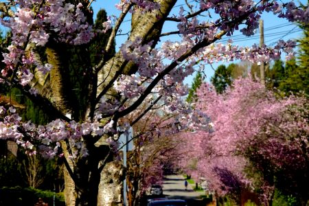 montlake_spring_2013_2