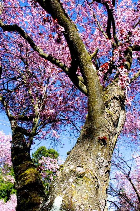 montlake_spring_2013_3